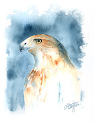 Red-tailed Hawk Paintings - The Magnificent Hawk by Arline Wagner
