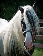 Horse Portrait Photos - The Magnificent Steed by Terry Kirkland Cook