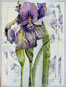 Iris Digital Art Prints - The Magnificient Iris Print by Mindy Newman