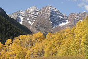 Fir Trees Prints - The Majestic Maroon Bells Are Framed Print by Charles Kogod