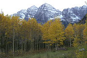 Fir Trees Photos - The Majestic Maroon Bells Rise by Charles Kogod