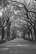 Central Park Prints - The Mall and the Poets Print by Christopher Kirby