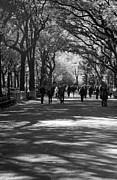 Central Park Digital Art Prints - THE MALL at CENTRAL PARK Print by Rob Hans