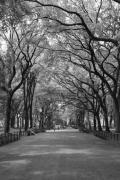 Central Park Photos - The Mall in Central Park and Poets Walk by Christopher Kirby