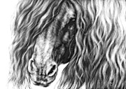 Friesian Prints - The Mane Thing Print by  Ann Jeffree