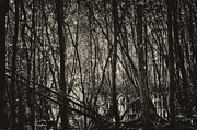 Mangrove Forest Metal Prints - The Mangrove Metal Print by Armando Perez
