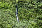 Manoa Falls Posters - The Manoa Falls Waterfall In Honolulu Poster by Stacy Gold