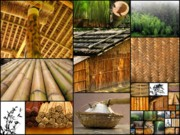 Etc. Photo Metal Prints - The Many Faces of Bamboo Metal Print by Yali Shi