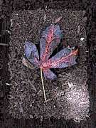 Tree Leaf Digital Art Posters - The Maple 5 Poster by Tim Allen