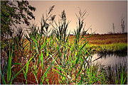 Mikki Cucuzzo Metal Prints - The Marsh Metal Print by Mikki Cucuzzo