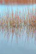 The Marsh Mirror Print by Loree Johnson