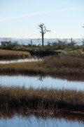 "\""reflection Photographs\\\"" Posters - The Marsh Poster by Renee Holder"