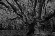 Live Oak Digital Art - The Matriarch by David Lee Thompson