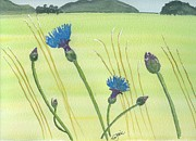 Meadow Drawings - The Meadow by Eva Ason