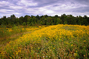 Twister Prints - The Meadow Print by Robert Harmon