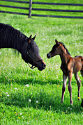 Foals Metal Prints - The Meet Metal Print by Emily Stauring