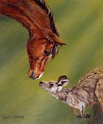 Kangaroo Paintings - The meeting by Sue Linton