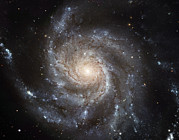 Composites Posters - The Messier 101, Or Pinwheel, Galaxy Poster by