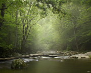 Smokey Mountains Digital Art Posters - The Middle Prong River in Fog Poster by Smokey Mountain  Art