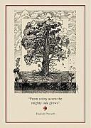 Seasons Drawings Posters - The Mighty Oak Poster by Ernestine Grindal
