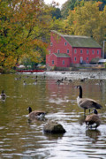 Geese Framed Prints - The Mill Framed Print by Scott Mahon