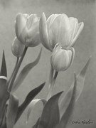 Decorating Mixed Media - The Mirror Tulips by Debra     Vatalaro