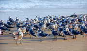Shore Birds Photos - The Monday Morning Meeting by Susanne Van Hulst