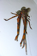 Copper Sculpture Sculptures - The Monster Insect by Reiner Poser