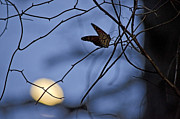Jeka World Photography Prints - The Moon and the Monarch Print by Jeka World Photography