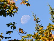 Moon Detail Prints - The Moon This Morning Print by Ronda Broatch
