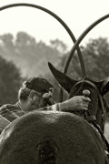 Mule Photos - The Mule Man by Ron  McGinnis