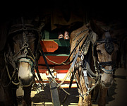 Mules Prints - The Mule Train Print by Steven  Digman