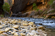 Virgin River Prints - The Narrows Struggle To Survive Print by Bob Christopher