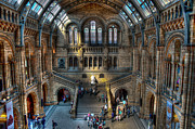 Stood Digital Art Framed Prints - The Natural History Museum London UK Framed Print by Donald Davis
