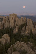 Custer State Park Posters - The Needles Protrude From Forests Poster by Phil Schermeister