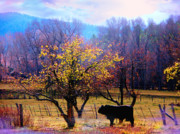 Black Angus Prints - The Neigbors Bull Where The Delicious Fall El Valle NM Print by Anastasia  Ealy