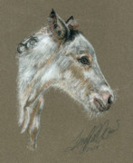 Original Art Pastels Prints - The New Colt Print by Terry Kirkland Cook