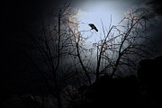 Perigee Moon Prints - The Night The Raven Appeared In My Dream . 7D12631 Print by Wingsdomain Art and Photography