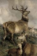 Stag Metal Prints - The Noble Beast Metal Print by Sir Edwin Landseer