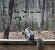 Laugh Art - The Nut Was This Big by Douglas Barnett