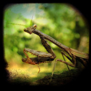 Bugs Photos - The Observer by Amy Tyler