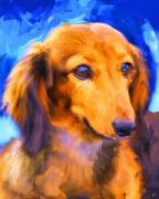 Dachshund Paintings - The Observer by Jai Johnson