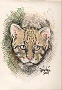 Philippines Drawings - The Ocelot by Dindin Coscolluela