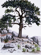 Mountain Pine Tree Painting Framed Prints - The Offering Tree Framed Print by Tom Dorsz