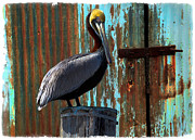 Tropical Bird Print Posters - The Old Dock Poster by Debra and Dave Vanderlaan