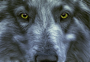 Fractalius Framed Prints - The Old Grey Wolf Framed Print by Joachim G Pinkawa