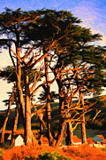 Tomales Bay Prints - The Old Grove At The Ranch At Sunset . 40D4531 . Painterly Print by Wingsdomain Art and Photography
