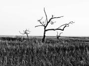Salt Marsh Photos - The Old Guard by Scott Pellegrin