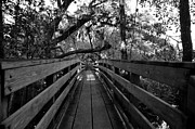 Trees And Bridge Prints - The old Hillsborough Bridge Print by David Lee Thompson