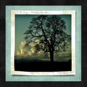 Nature Scene Mixed Media Prints - The Old Oak Print by Bonnie Bruno
